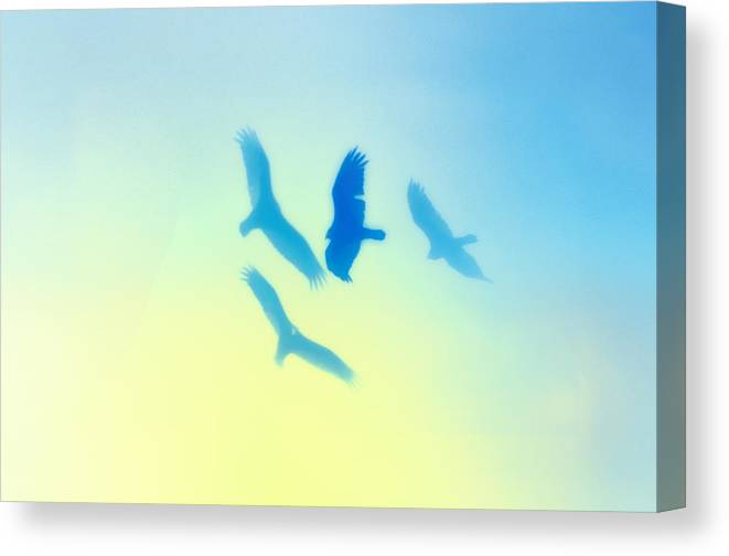 Hawks Canvas Print featuring the photograph Circling by Bill Cannon