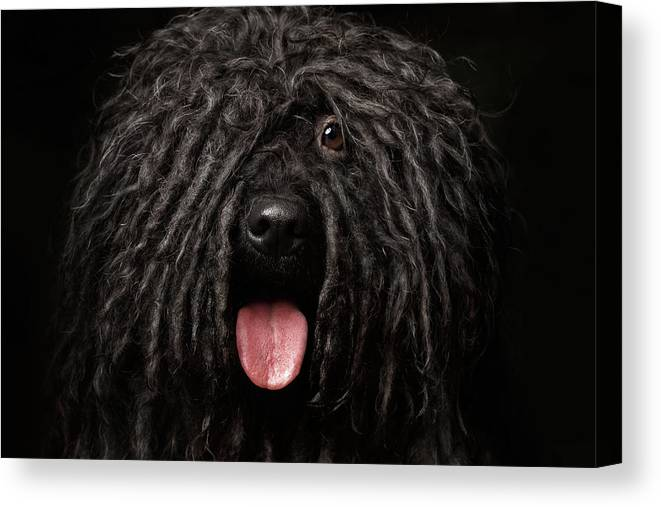 Dog Canvas Print featuring the photograph Close Up Portrait Of Puli Dog  Isolated On Black by 3fc51d073