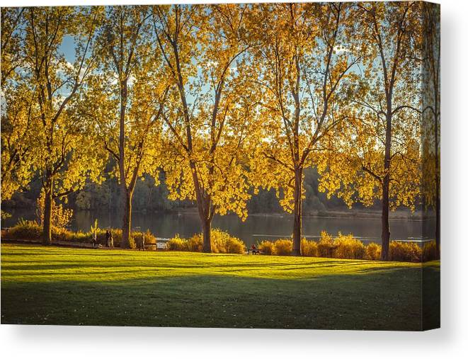 Forest Canvas Print featuring the photograph Colors Of Fall by Mauricio Ricaldi