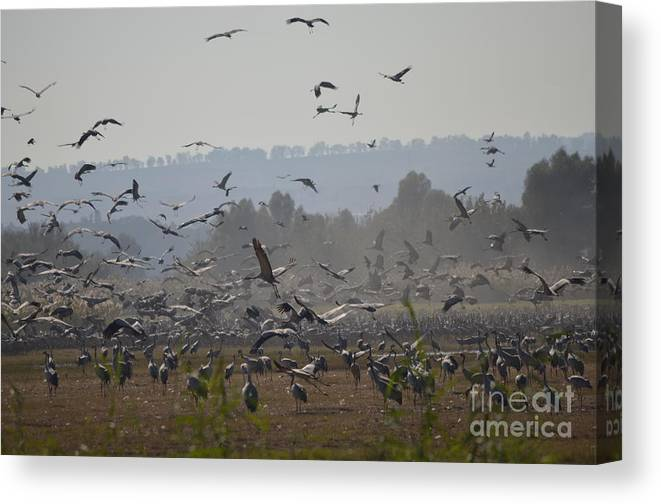 Landscape Canvas Print featuring the photograph Colourful Flying Chaos by Matanel Kaye