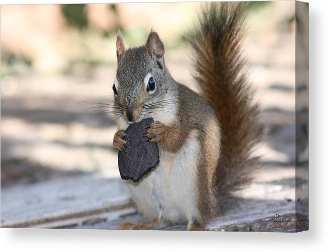 Cookie Squirrell Nature Wild Animal Chocolate Food Camping Outdoors Canvas Print featuring the photograph Cookie Monster by Andrea Lawrence