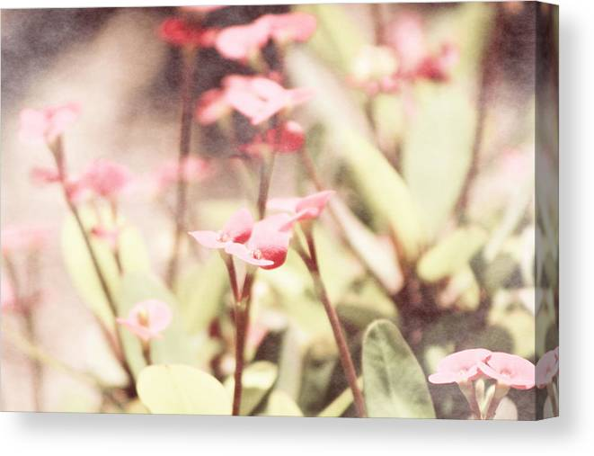 Prism Pink Canvas Print featuring the photograph Country Memories In Prism Pink by Colleen Cornelius