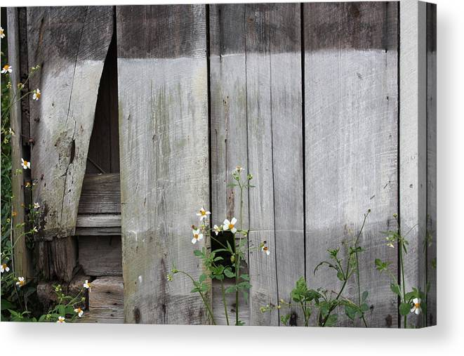 Fine Art Canvas Print featuring the photograph Country Store Three by Paula Coley