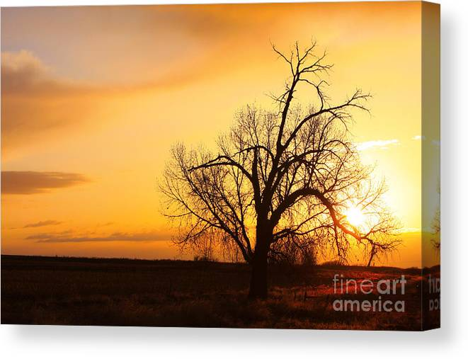 Sunrise Canvas Print featuring the photograph Country Sunrise by James BO Insogna