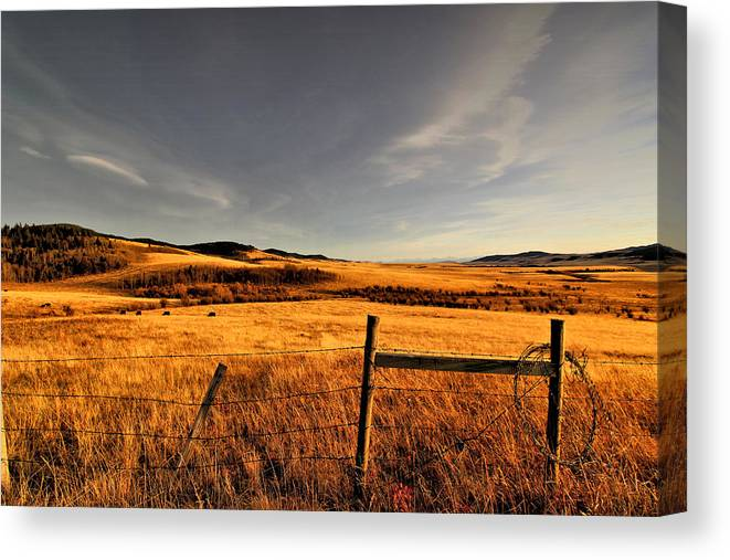 Light Canvas Print featuring the photograph Cowboy Trail by Julie Dewilde