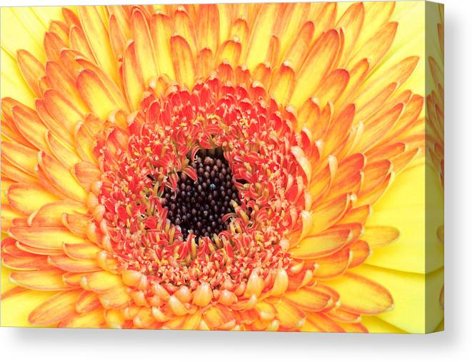 Flower Canvas Print featuring the photograph Creation Of A Masterpiece by Pierre Leclerc Photography