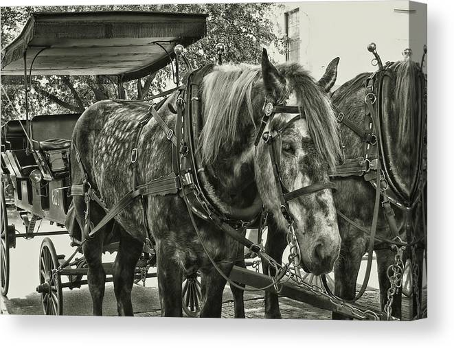 Horse Canvas Print featuring the photograph Dapple Grey by JAMART Photography