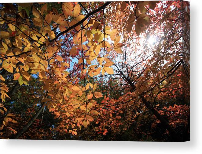 Leaves Canvas Print featuring the photograph Dappled Sunshine by Mary Haber