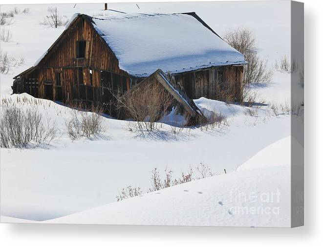 Nature Canvas Print featuring the photograph Days Gone By 3 by Tonya Hance