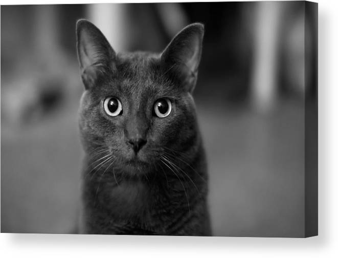 Kitten Canvas Print featuring the photograph Deep Stare by Mandy Wiltse