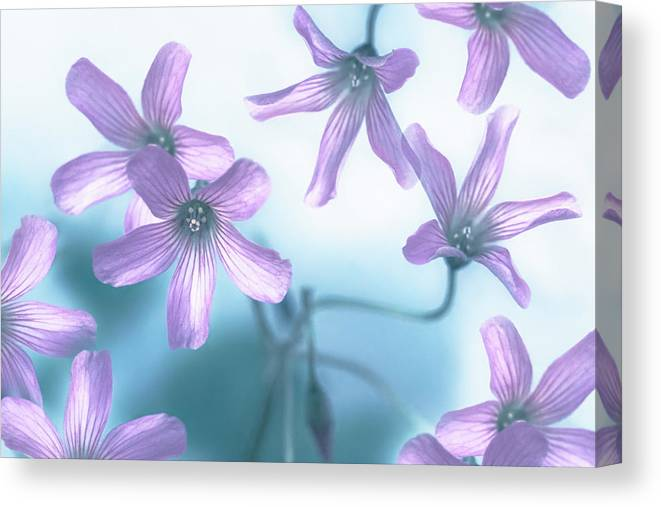 Flowers Canvas Print featuring the pyrography Dizziness by Hanna Tor