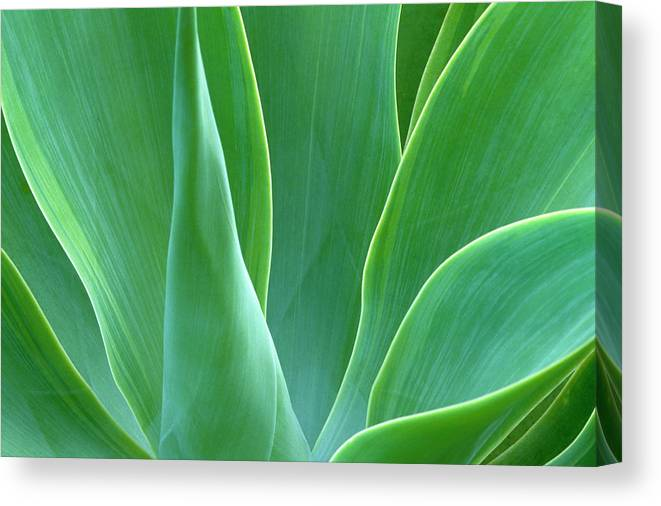 America Canvas Print featuring the photograph Dream Green by Eggers Photography