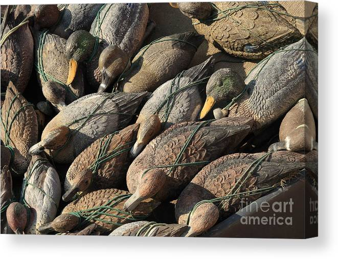 Ducks Canvas Print featuring the photograph Duck Decoys On Burano by Michael Henderson