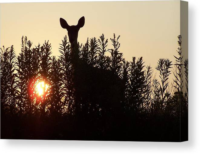 Deer Canvas Print featuring the photograph Early Morning Visitor by Laurie Prentice