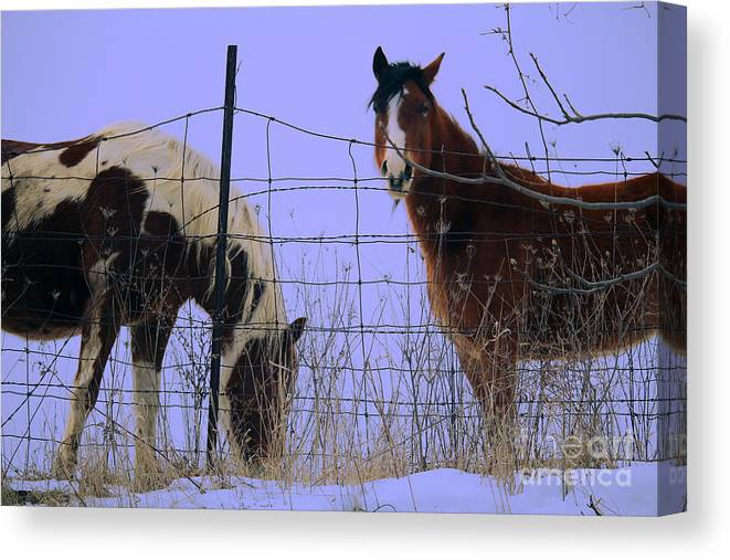 Horse Canvas Print featuring the photograph Equestrian Beauties by Laura Birr Brown