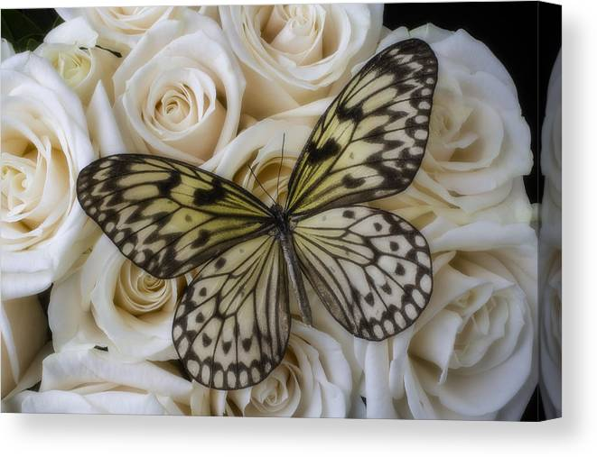 Rose White Roses Canvas Print featuring the photograph Exotic Butterfly On White Roses by Garry Gay