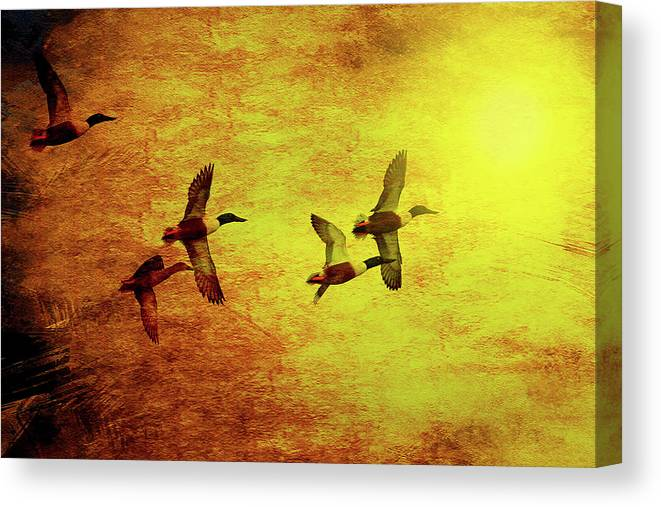 Bird Canvas Print featuring the photograph Fall Migration . Northern Shovelers . Texture . 40d5393 by Wingsdomain Art and Photography