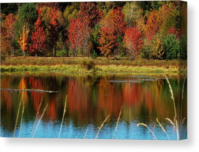 Autumn Canvas Print featuring the photograph Fall Splendor by Linda Murphy
