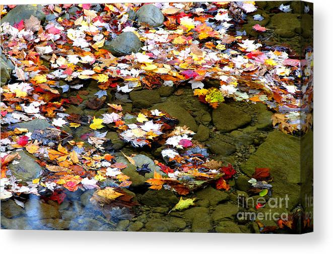 Autumn Canvas Print featuring the photograph Fallen Leaves Birch River by Thomas R Fletcher