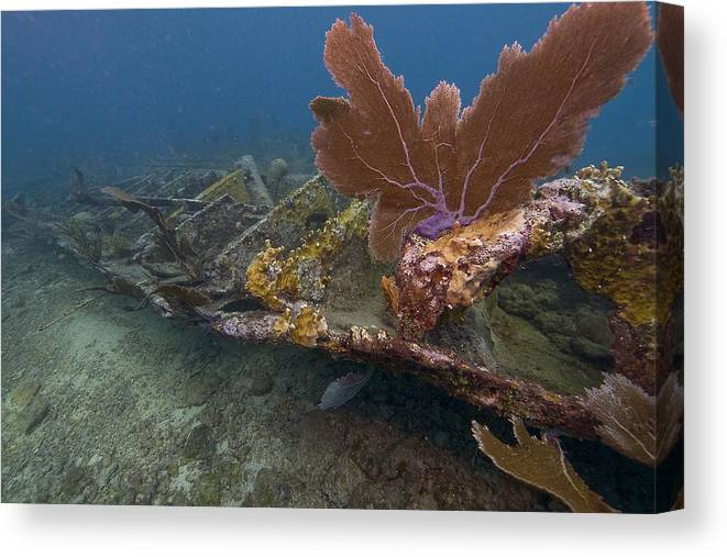 Coral; Atlantic Ocean; City Of Washington; Elbow Reef; Florida; Key Largo; Scuba Diving; Underwater Canvas Print featuring the photograph Fan Coral On Elbow Reef In Key Largo by Bob Hahn