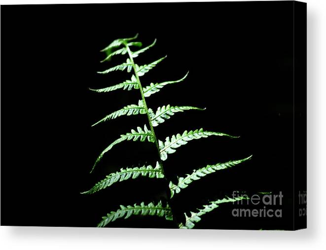 Nature Canvas Print featuring the photograph Fern by Robin Lynne Schwind