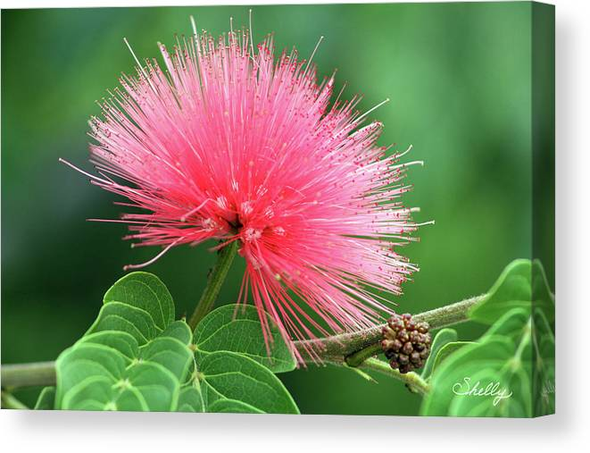 Flower Canvas Print featuring the photograph Firework Flower by Shelly OBrien