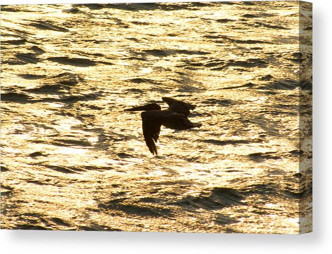 Bird Canvas Print featuring the photograph Flight Of The Pelican by Andreas Freund