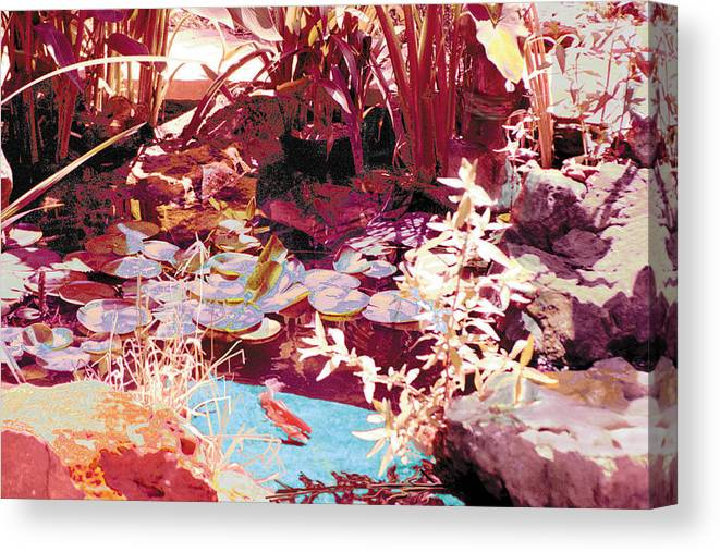 Koi Canvas Print featuring the photograph Floating Lilies Pads Above The Koi. by Judy Loper