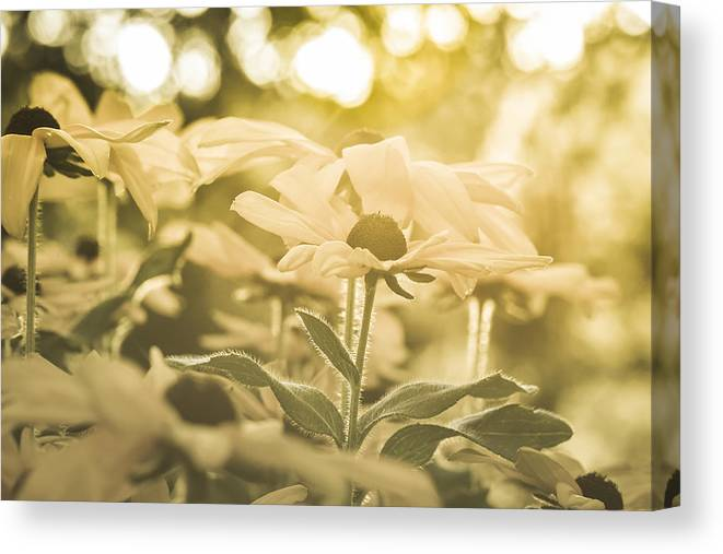 Flowers Canvas Print featuring the photograph Spellbound by Joy McAdams