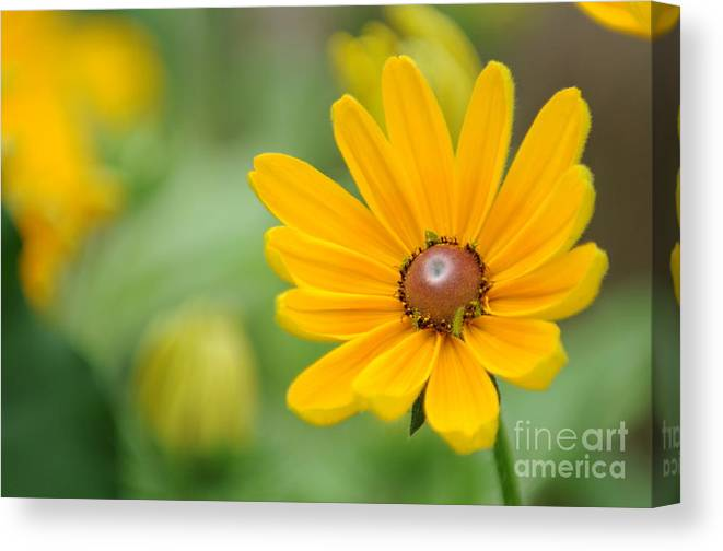 Yellow Canvas Print featuring the photograph Flower by Miguel Celis