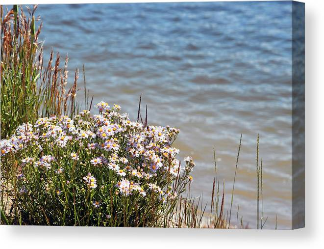 Flowers Canvas Print featuring the photograph Flowers At The Lake by Linda Benoit