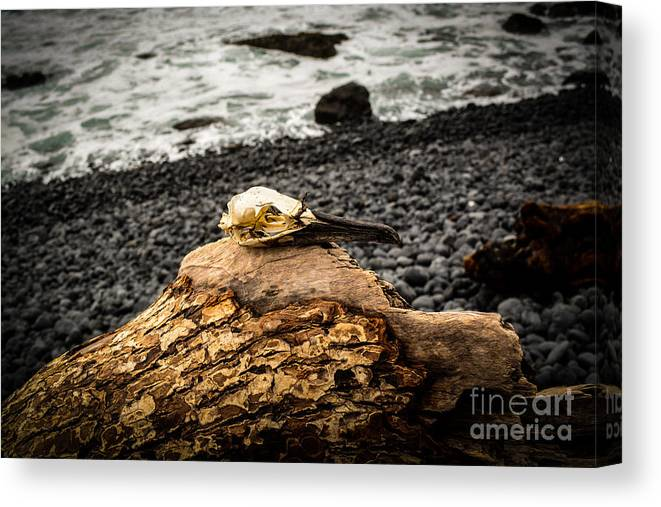 Beach Canvas Print featuring the photograph Fly No More by Alex Peralta