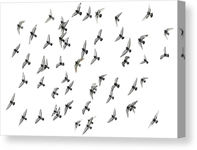 Pigeon Canvas Print featuring the photograph Flying Formation by Hans Kool