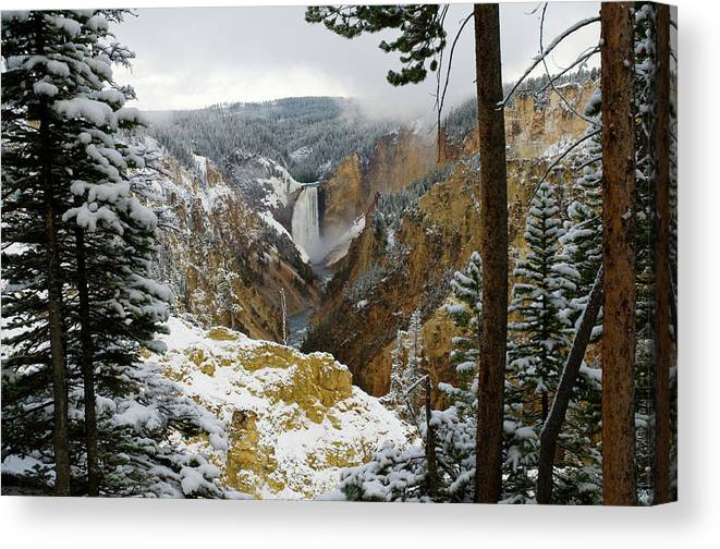 Yellowstone Canvas Print featuring the photograph Frosted Canyon by Steve Stuller