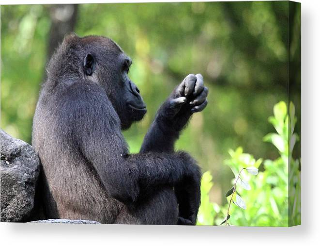 Animal Canvas Print featuring the photograph Gee What Should I Make For Dinner by Mary Haber