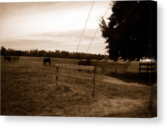 Horses Canvas Print featuring the photograph Ghost Horses Of Huckleberry Lane by Heather S Huston