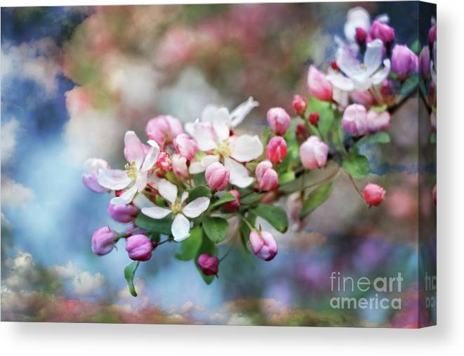 Flower Canvas Print featuring the photograph Gift From Heaven by Elizabeth Dow