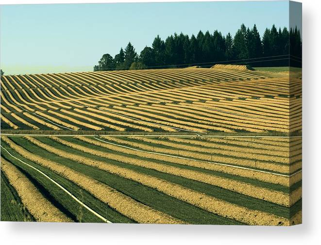 Plow Canvas Print featuring the photograph Golden Green by Sara Stevenson