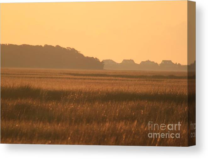 Marsh Canvas Print featuring the photograph Golden Marshes by Nadine Rippelmeyer