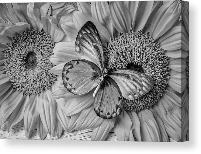 Gorgeous Butterfly On Sunflowers Black And White Canvas Print