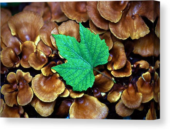 Nature Canvas Print featuring the photograph Green Leaf On Fungus by Carl Purcell