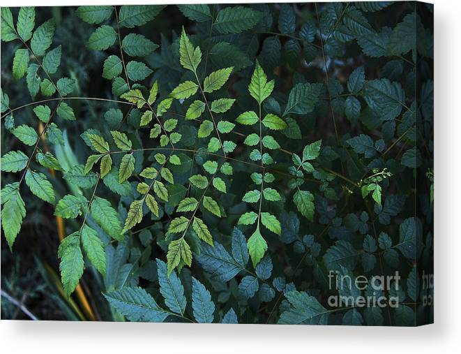 Nature Canvas Print featuring the photograph Green Leaves by Viktor Savchenko