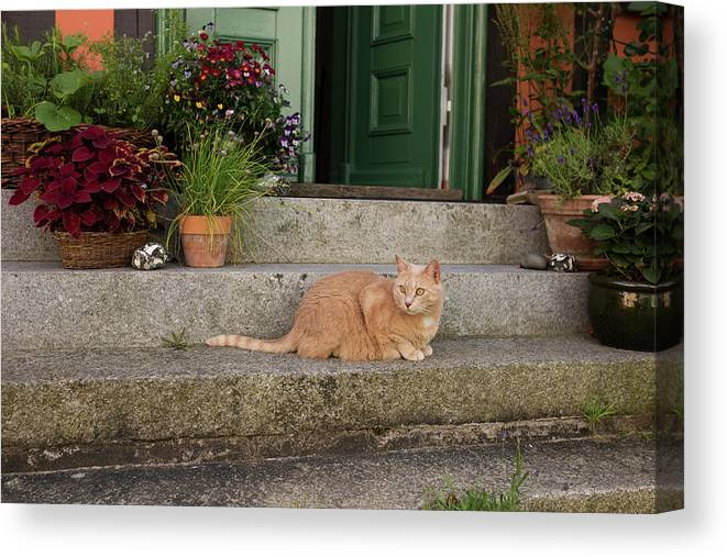 Animal Canvas Print featuring the photograph Guarding The Door by Lori Rider