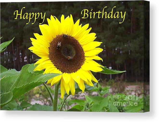 Happy Canvas Print featuring the photograph Happy Birthday - Greeting Card - Sunflower by Sascha Meyer