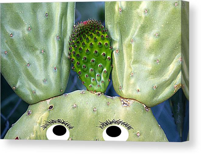 Cactus Canvas Print featuring the photograph Hare Stylist by Greg Taylor