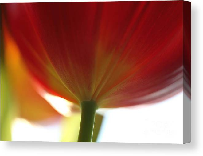 Tulip Canvas Print featuring the photograph Help Is Here by Amanda Barcon