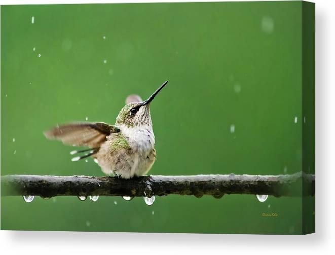 Hummingbird Canvas Print featuring the photograph Hummingbird In The Rain by Christina Rollo