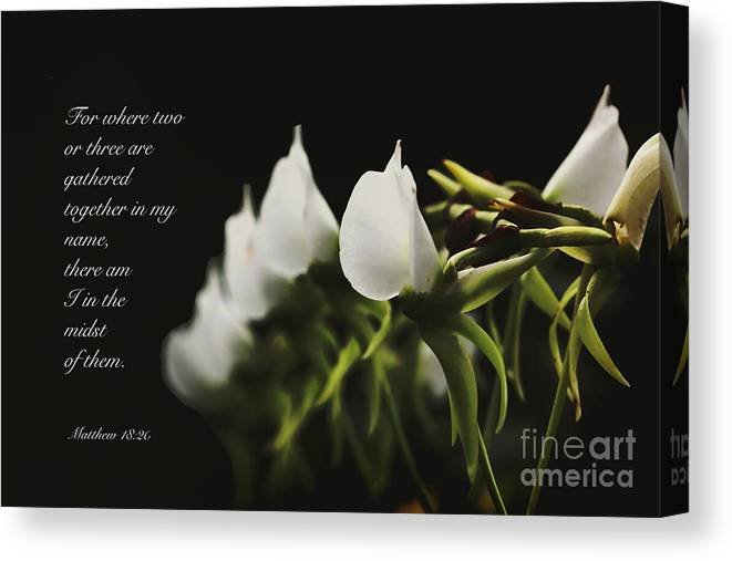 Floral Canvas Print featuring the photograph In The Midst by Debbie Nobile