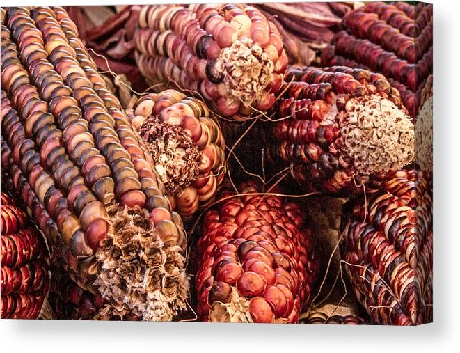 Indian Corn Canvas Print featuring the photograph Indian Corn by Bill Gallagher