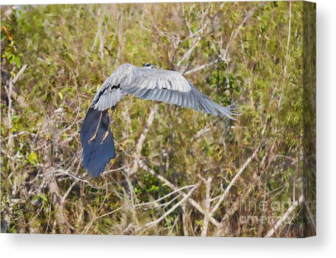 Everglades Canvas Print featuring the photograph Wild Retreat by Judy Kay